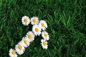 flower arrow sm